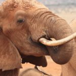 A Future Without Elephants_Blog_Banner Image | Remember A Charity