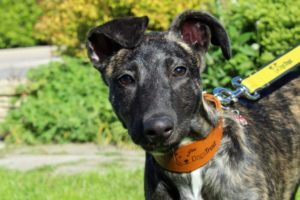 A legacy of hope for dogs like Indiana_Blog Post_Body Image | Remember A Charity
